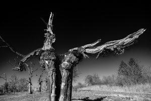 Alter Baum 1