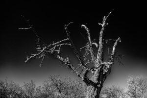 Alter Baum 2
