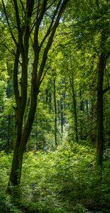 Im Wald 1
